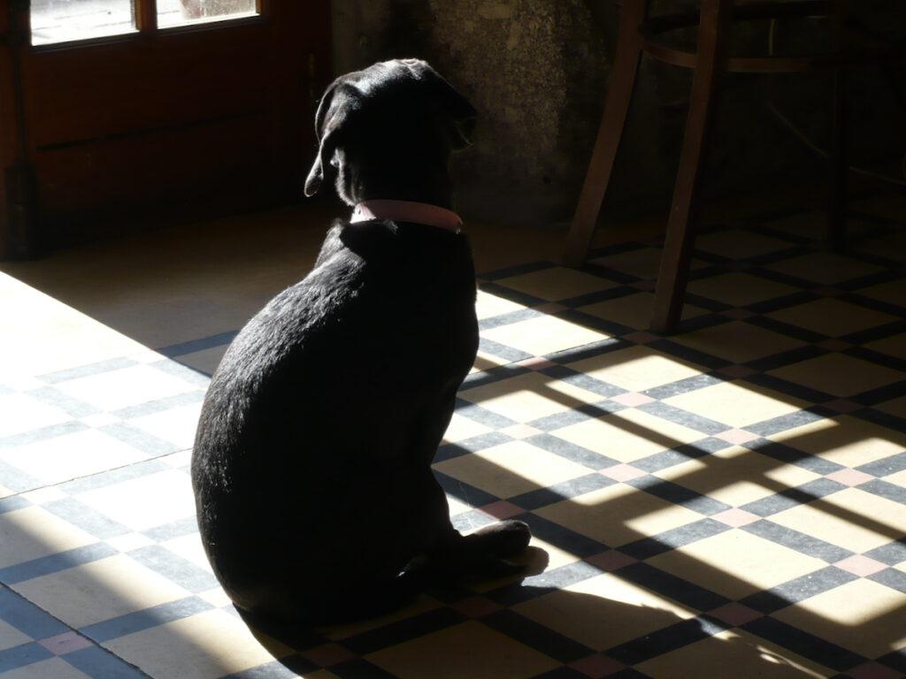 Hund im Abseits